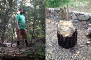 Up on a log