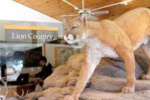 Visitors Center - Big Bend National Park
