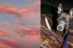 New Mexican Sky and my favorite dog.